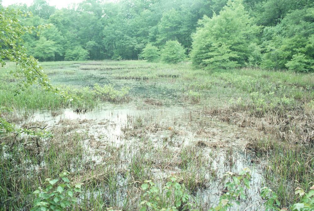 Marshes (Freshwater)