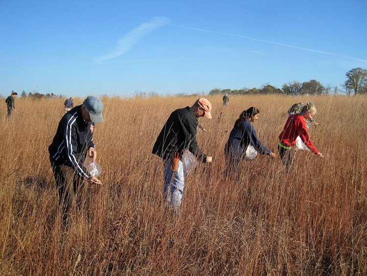 Seed Collection & Seedbanking Workshop - Click here for 2019 Schedule of Events