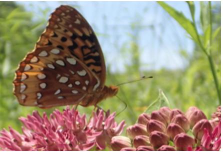 Teach us about pollinators? -