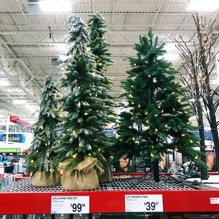 christmas trees sams club