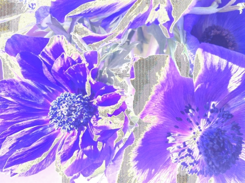 Purple Hearts (2014)