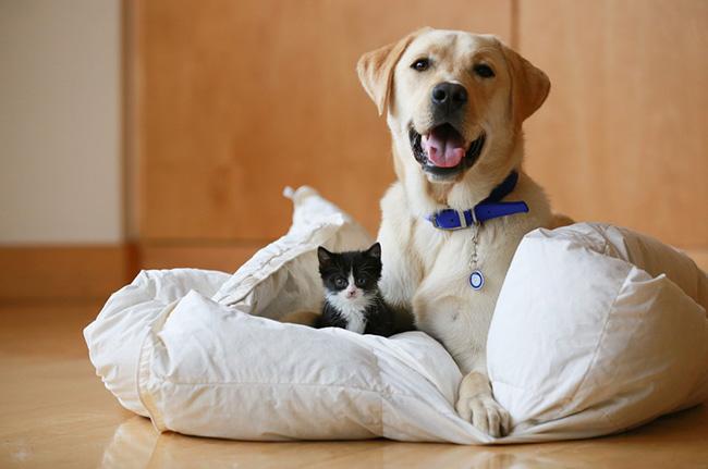 dog+++cat.jpg