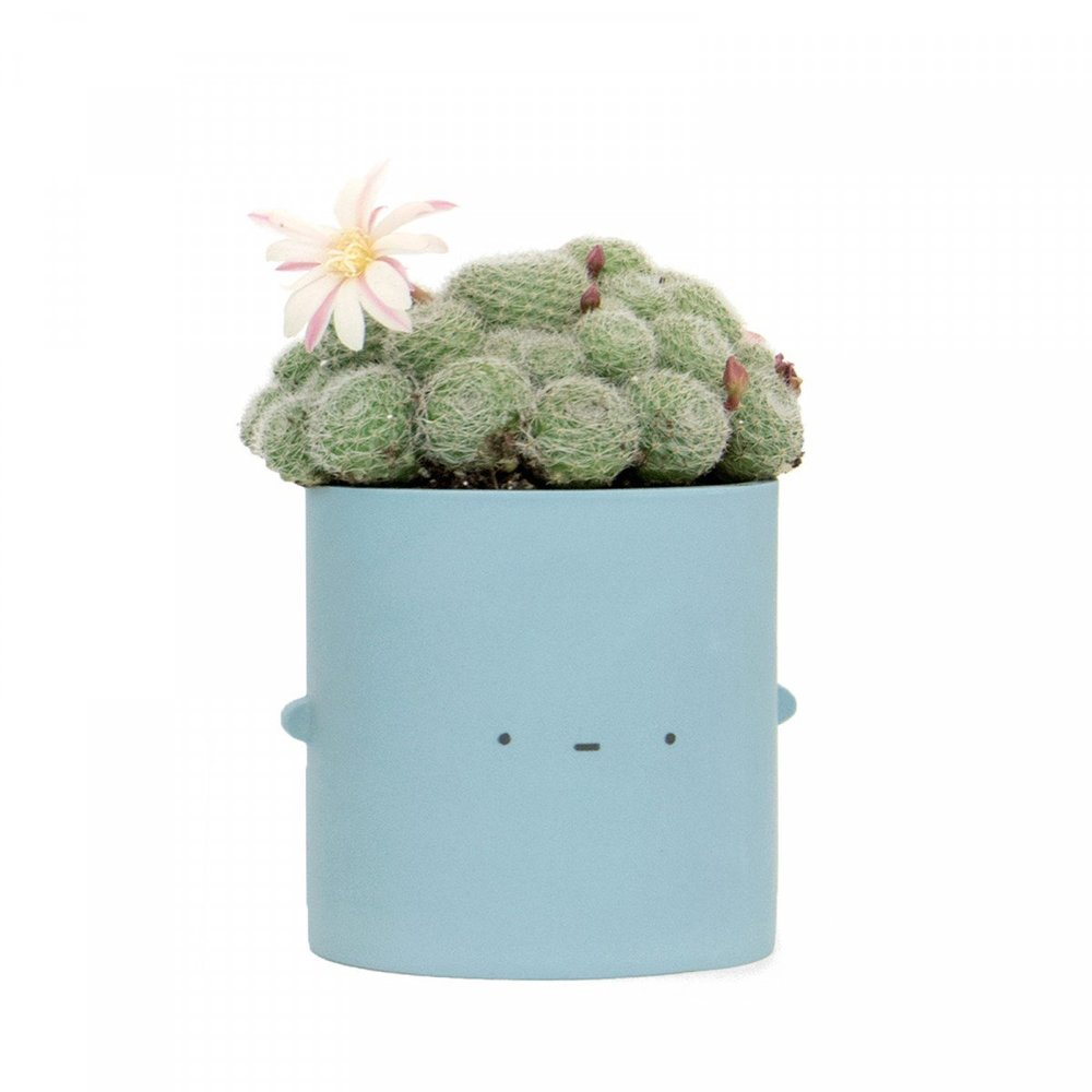Blue Not Impressed Pot - Just the tiniest of smiles from this sweet pot. A subtle little expression but has definitely has character! Our potted pal has been hand cast in parian clay and polished to a smooth finish, and is part of an exclusive Ohh Deer x Natalie J Wood collaboration.