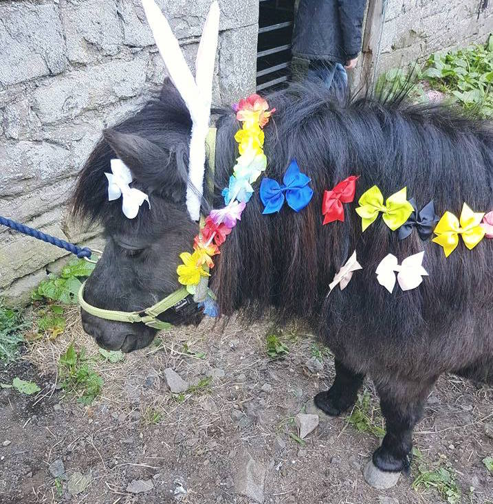 Libby the Pony