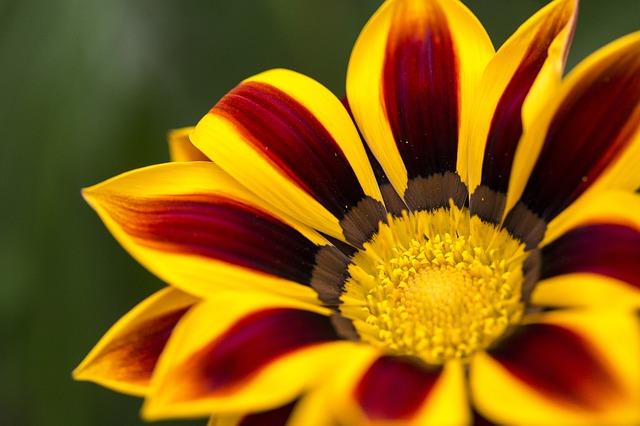 flower-784686_640.jpg