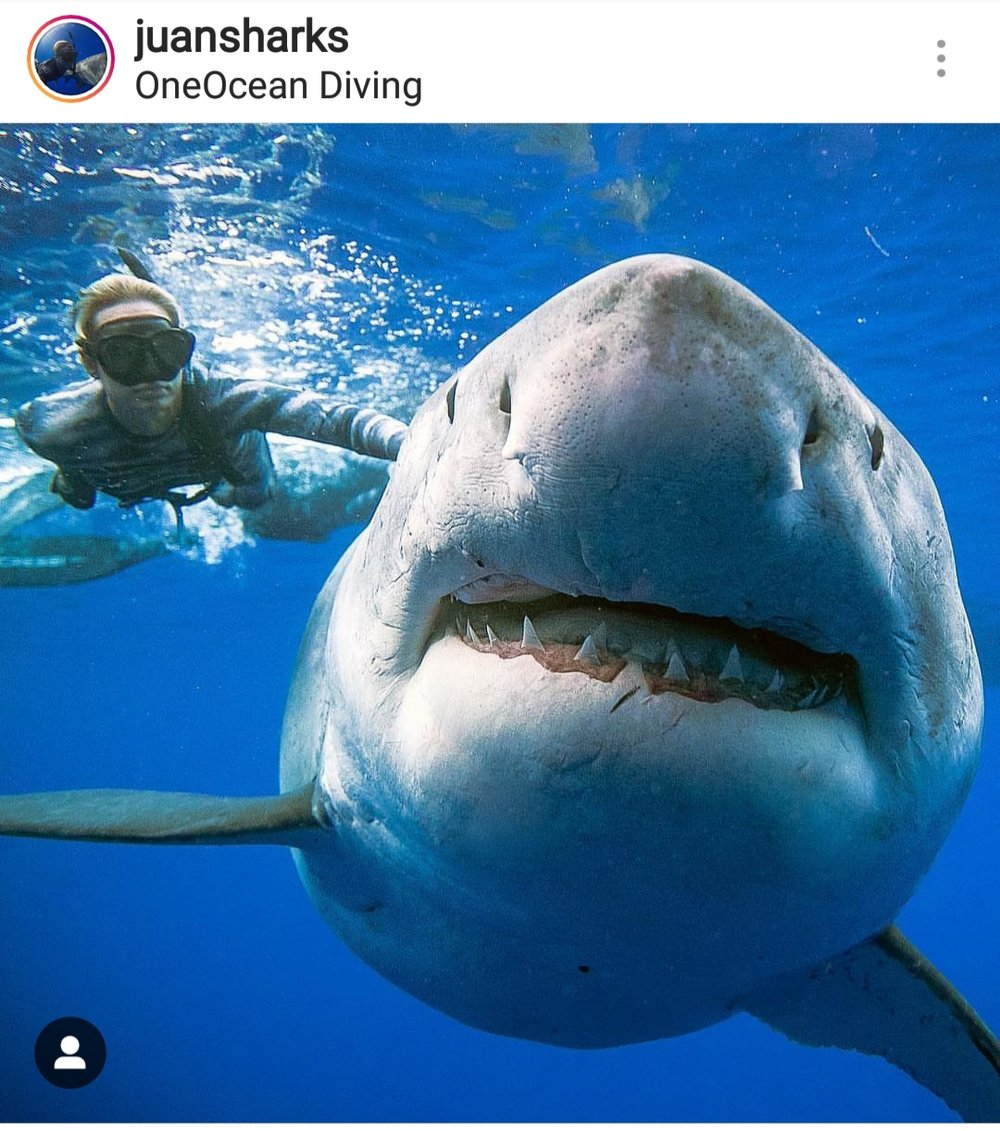 Photos courtesy of @oceanramsey @juansharks with  www.Oneoceandiving.com