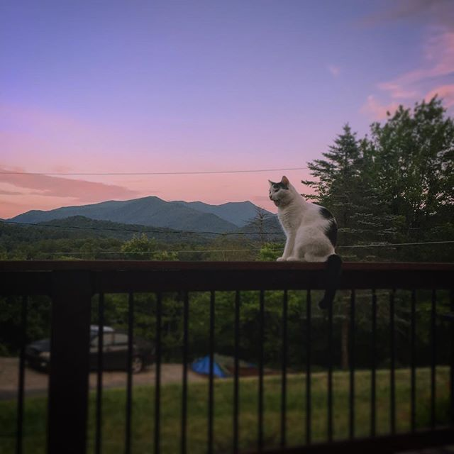 Enjoying the evening with my furry friend 😺⛰