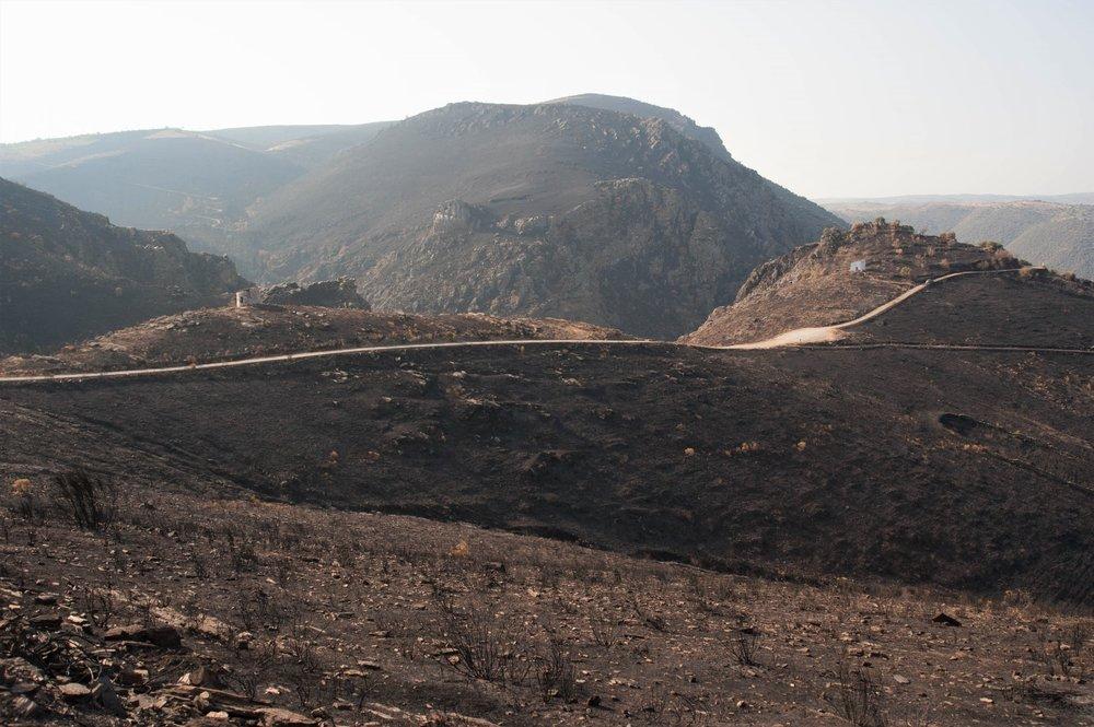 Wildfire Restoration 19.jpg