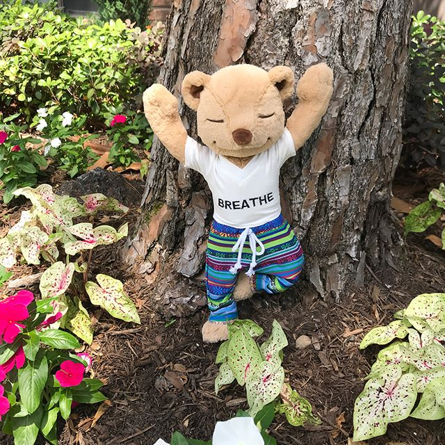 Meddy Teddy is practicing yoga in the garden today. He will be a great assistant in my kids yoga classes! #kidsyogateacher #kidsyoga #whybaptisteyoga #kellygartneryoga #yoga #yogainspiration #meddyteddy