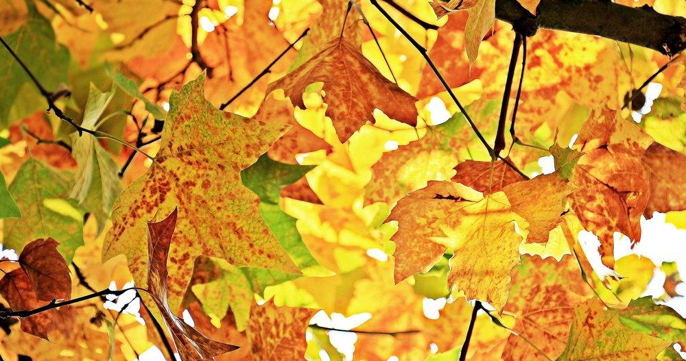 autumn-1655915_1920.jpg