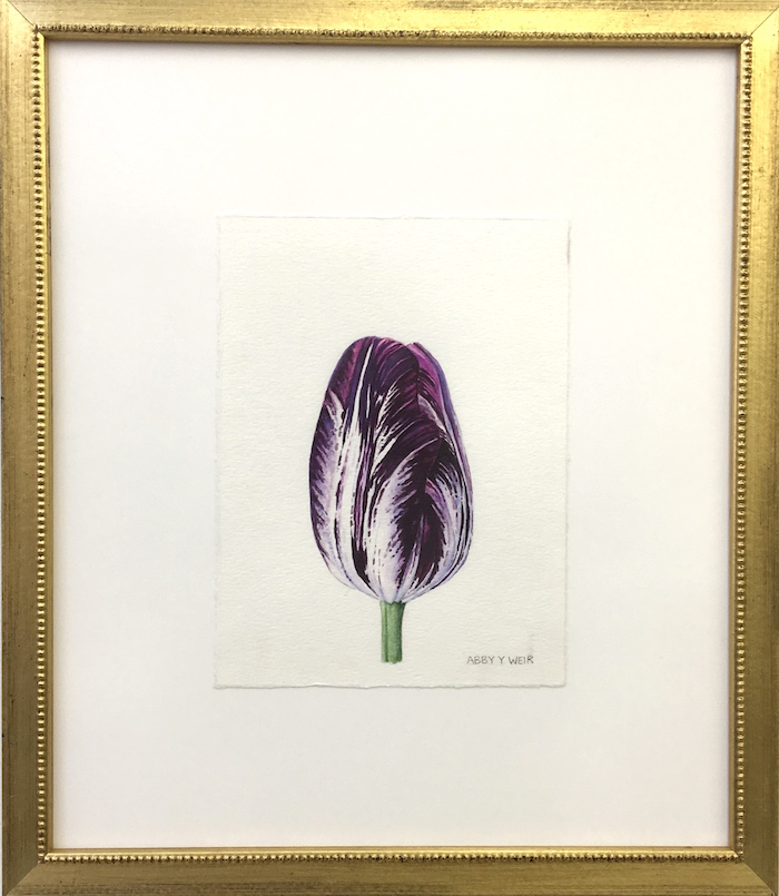 "Tulip 2 Original Watercolor, 2017  6 x 8"", 13 x 15 1/2"" framed"
