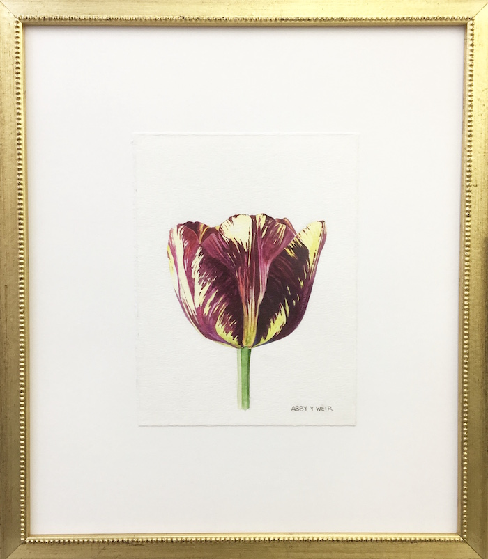 "Tulip 3 Original Watercolor, 2017  6 x 8"", 13 x 15 1/2"" framed"