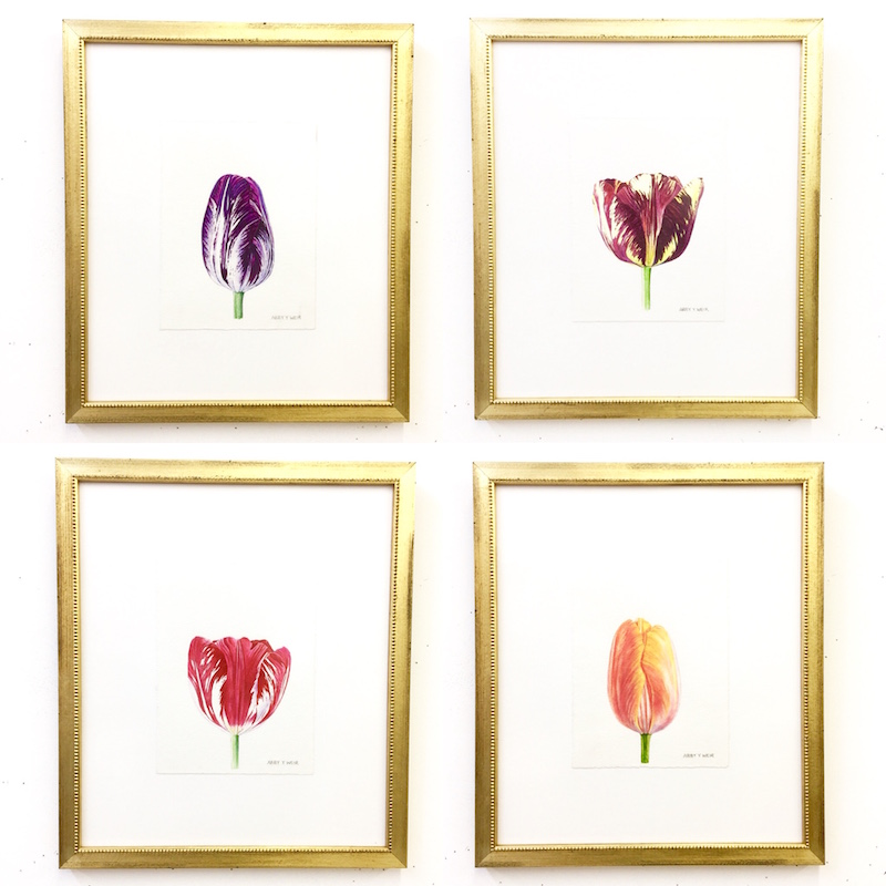 "Framed Tulips Original Watercolors, 2017 6 x 8"", 13 x 15 1/2"" framed"