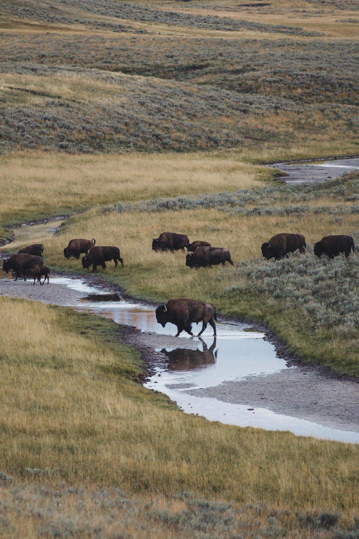 Yellowstone 2018 VSCO james glacier-10.jpg