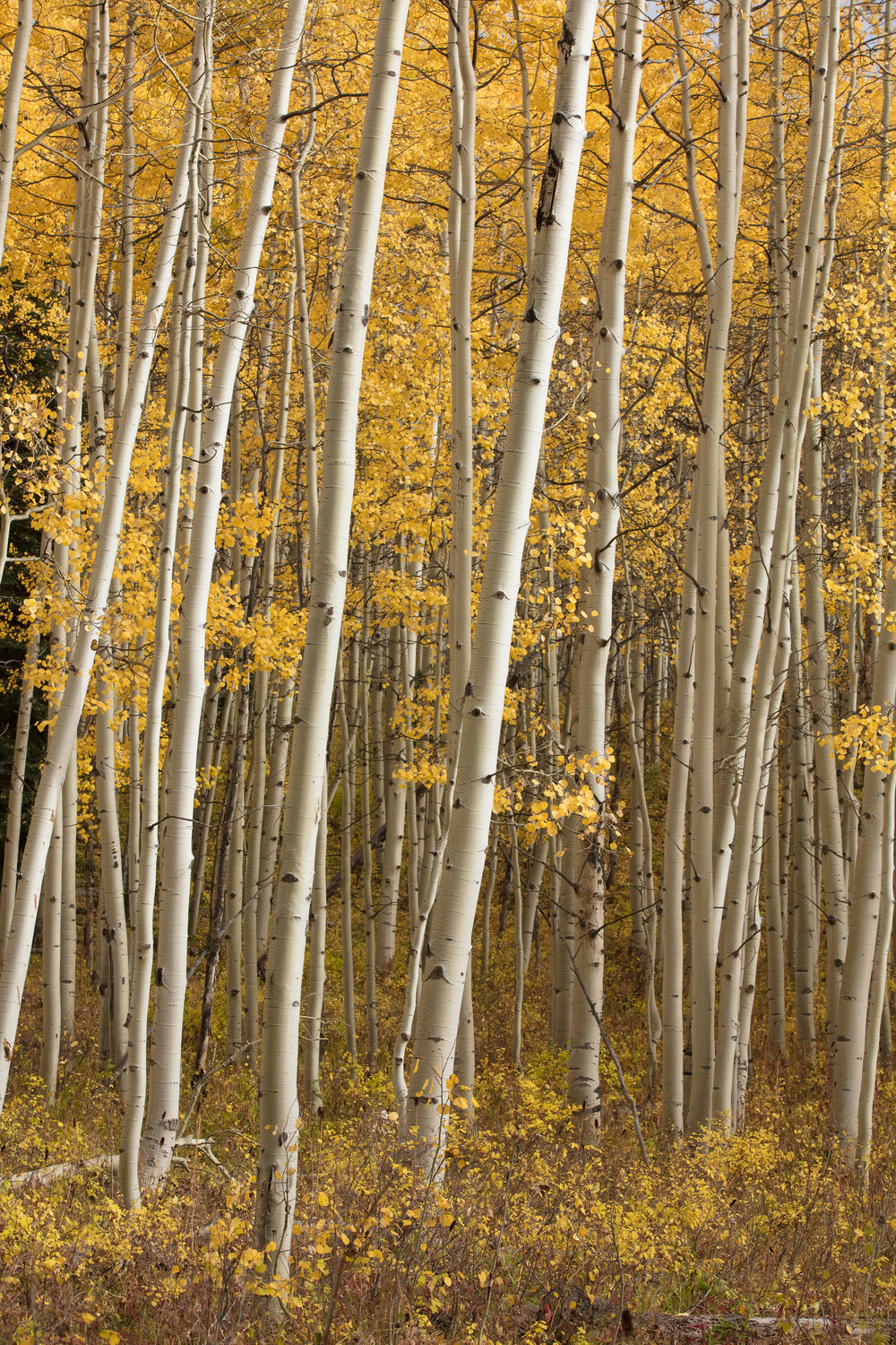 Colorado James Glacier crested butte-1.jpg