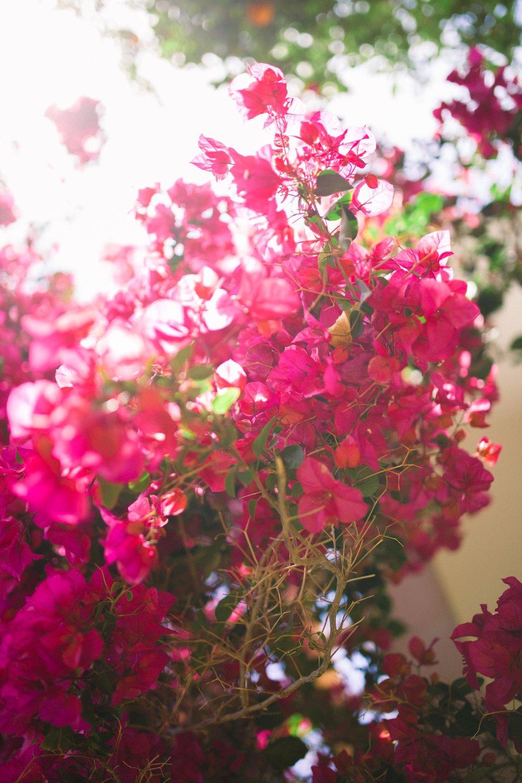 Natalie & Max Ibiza Destination Wedding-1.jpg