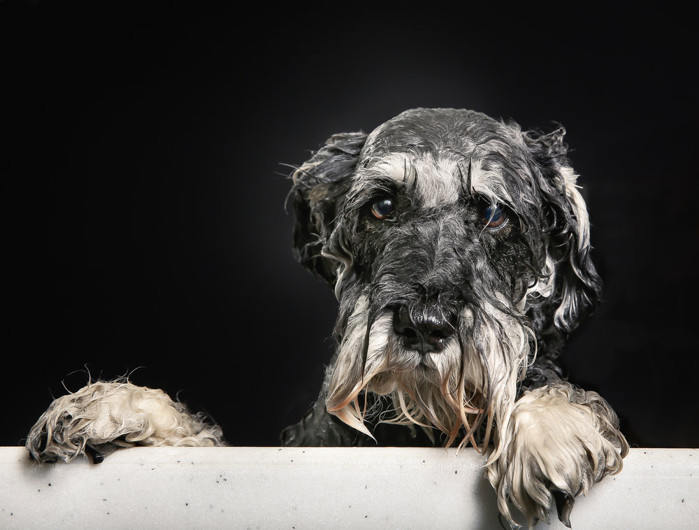 wet dog looking at you