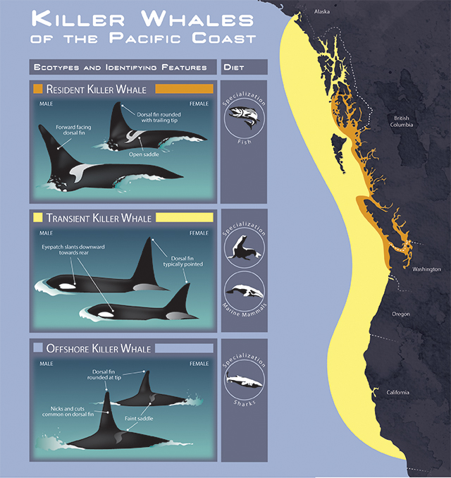 Killer Whales of the Pacific Coast