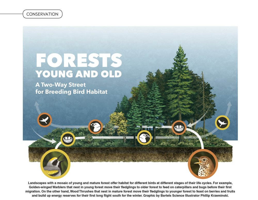 Old Growth/New Growth Impacts on Bird Conservation