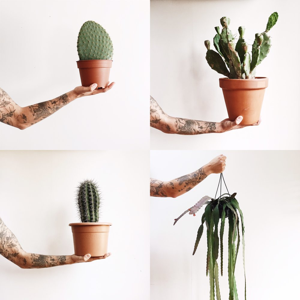 Cacti are really easy to keep and as long as they get loads of sun and the right amount of water you are good to go.