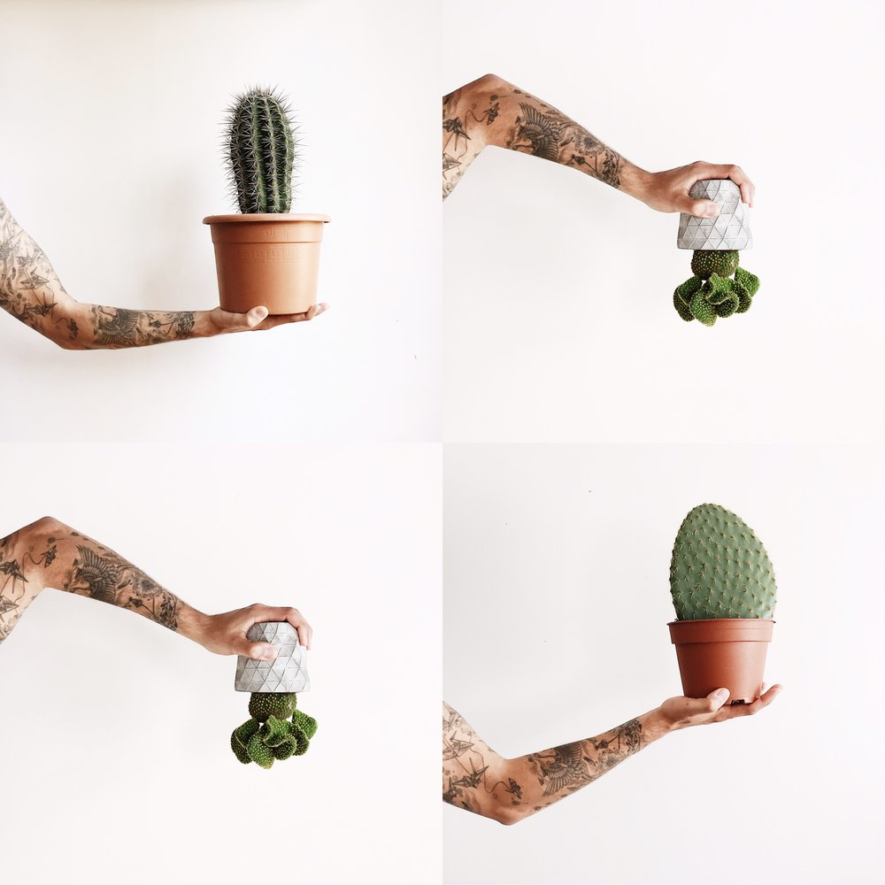 Easy to keep house plants TRIBE AND US