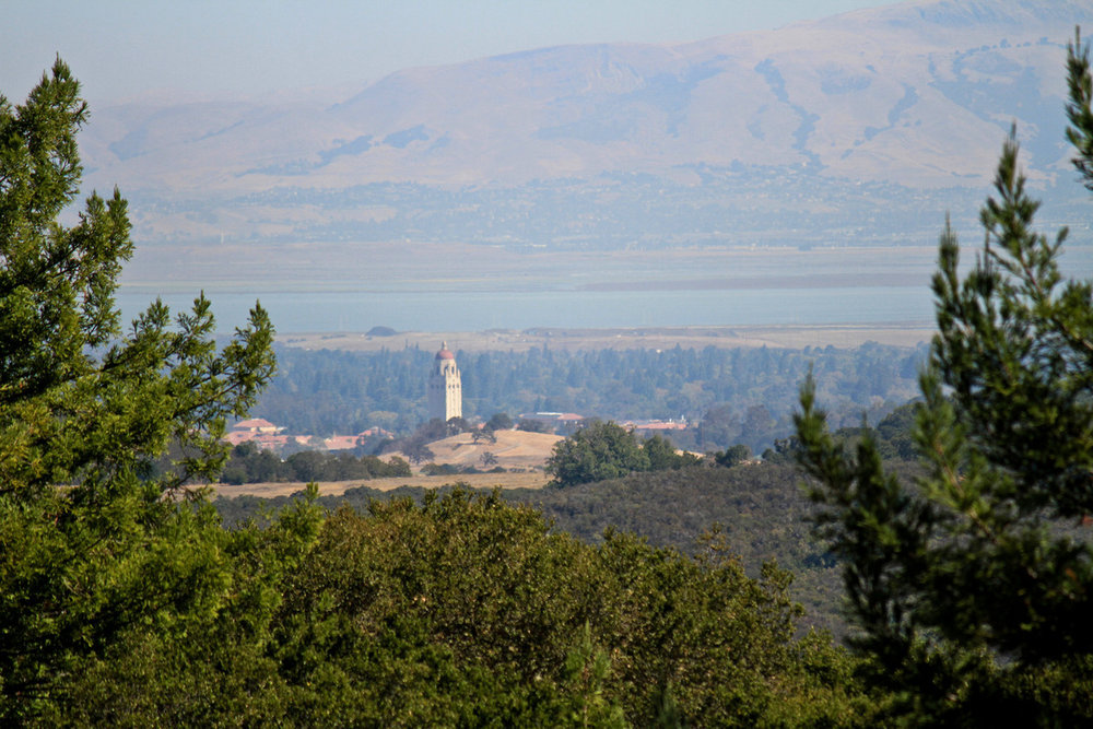Sanford Palo Alto.jpg