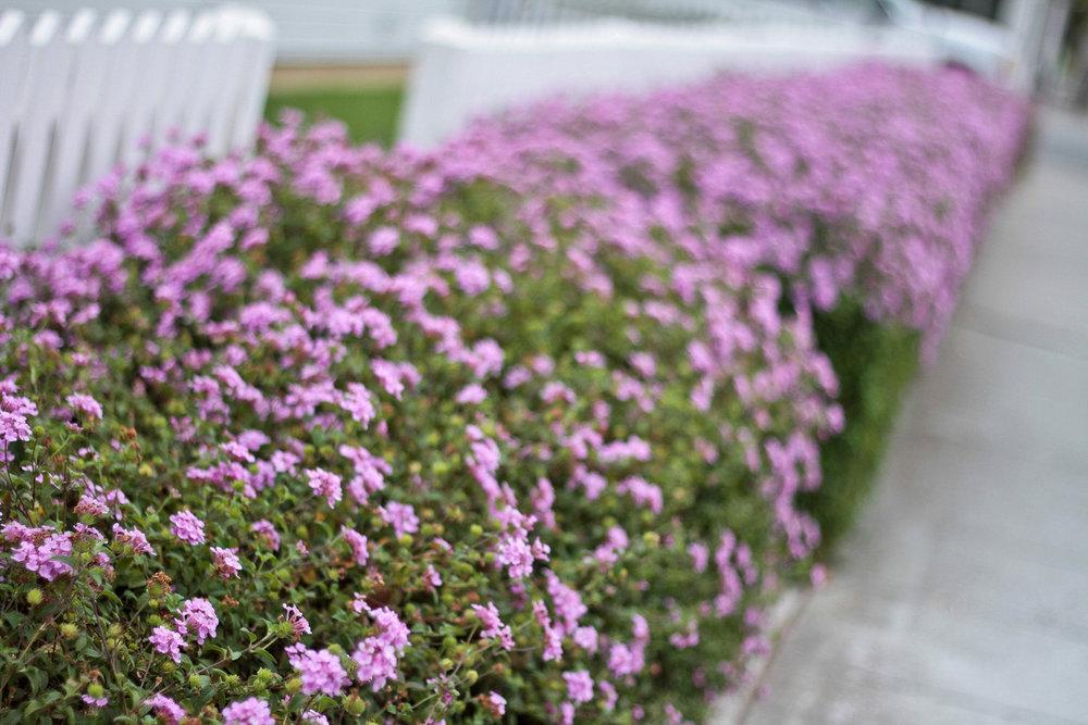 Palo Alto Flowers.jpg