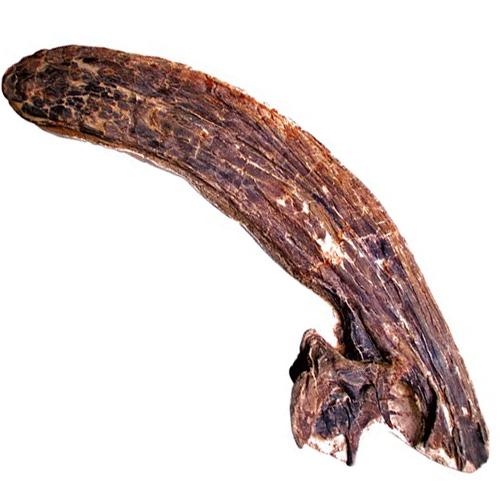 Parasaur.png