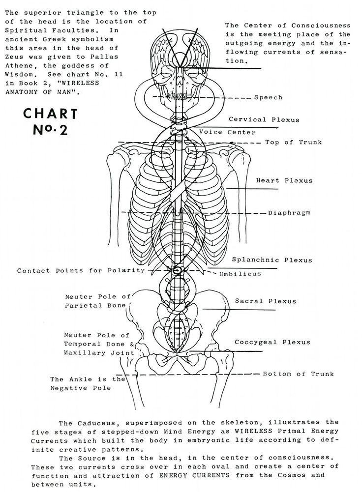 Polarity Therapy Volume 1, Book 1, Chart 02.jpeg