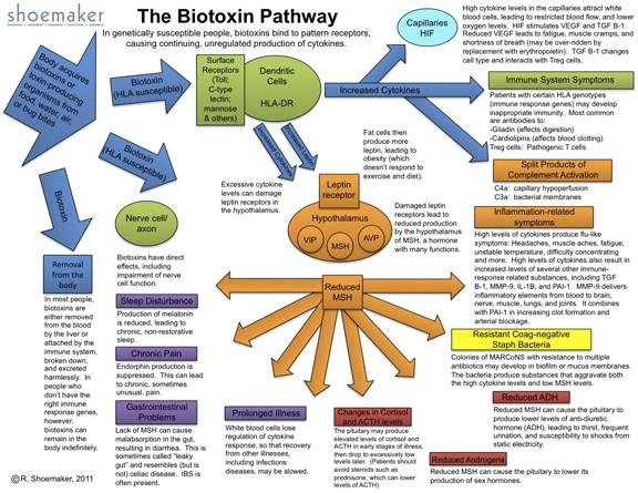biotoxin-pathway-photo.jpg