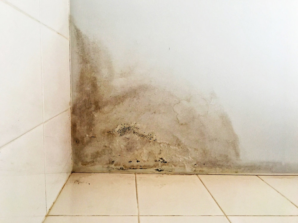 Toxic mold can grow indoors in places where water damage has occurred. The presence of stagnant water, humidity, and an enclosed space creates the perfect environment for mold growth.