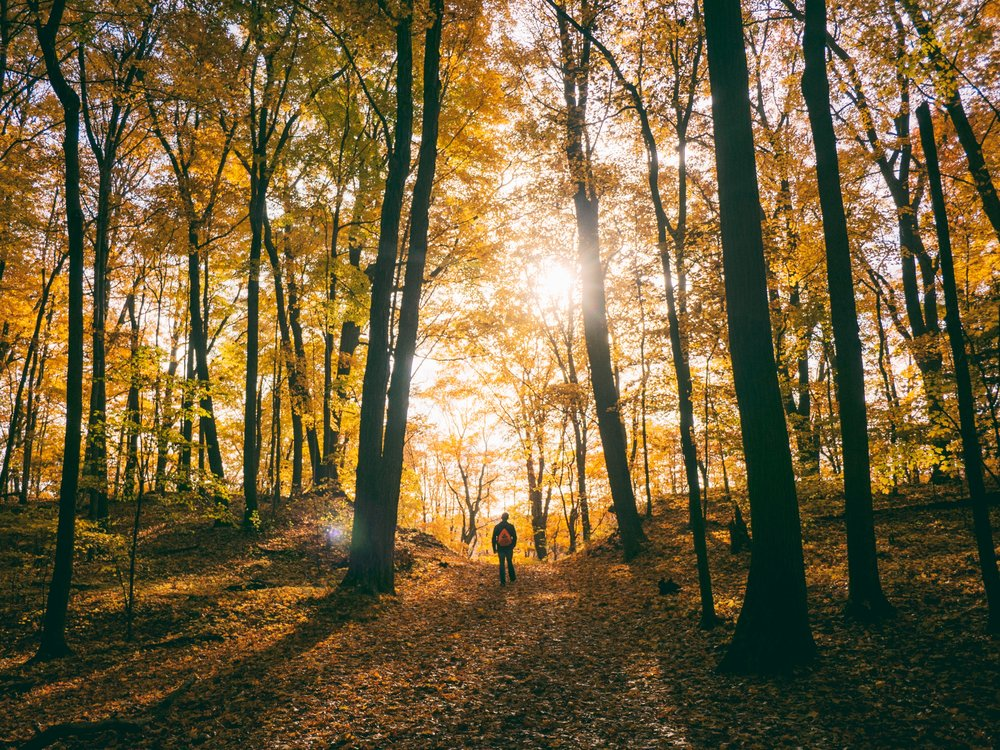 man walking autumn woods