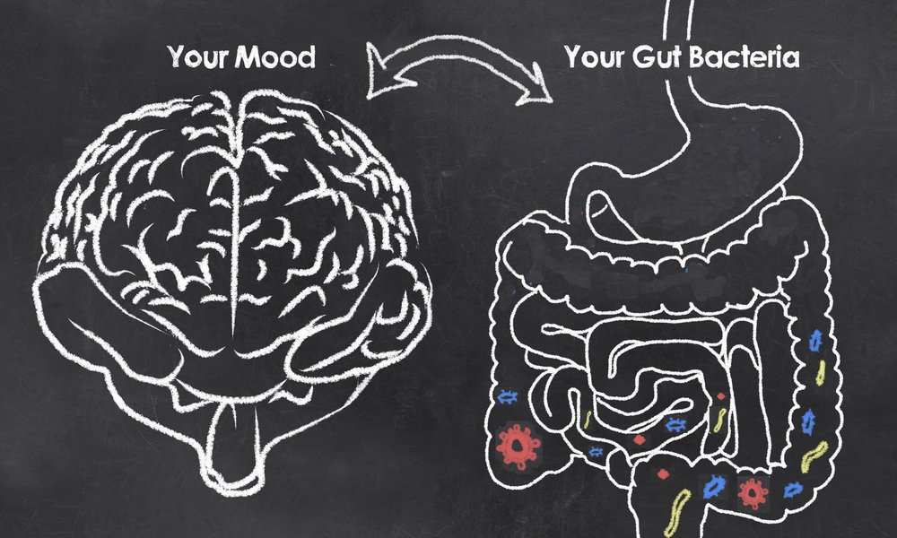 brain and gut bacteria.jpg