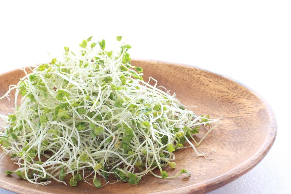 broccoli sprouts macro.jpg