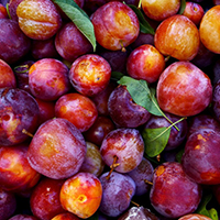 PLUMS 30-40 lbs Pitted & Frozen