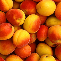 PEACH or NECTARINE  25 lbs Cut into pieces & Frozen