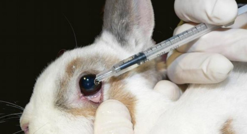 animal testing is cruel