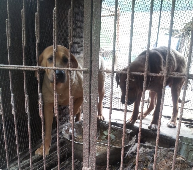 help the dogs in south korea
