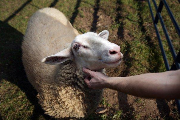 Photo courtesy of Woodstock Sanctuary