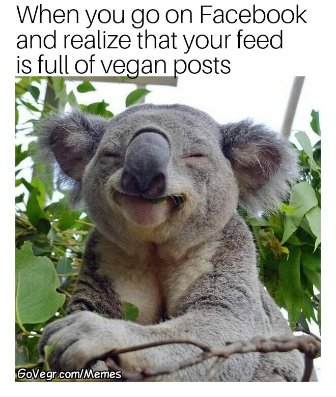 vegan friends meme