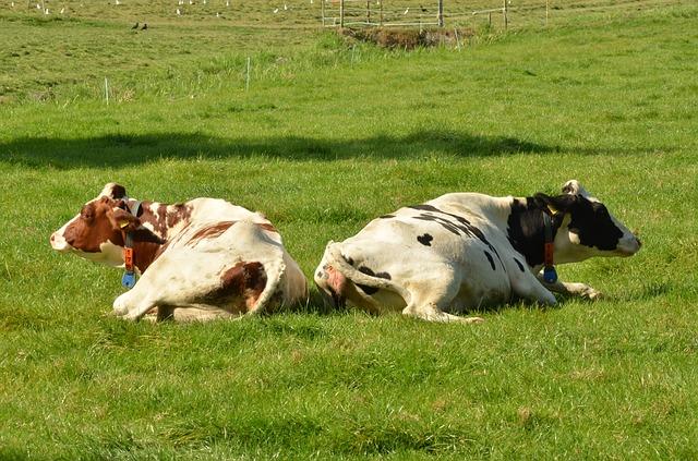 cow-1682892_640.jpg