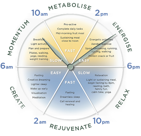 metabolic-clock.jpg