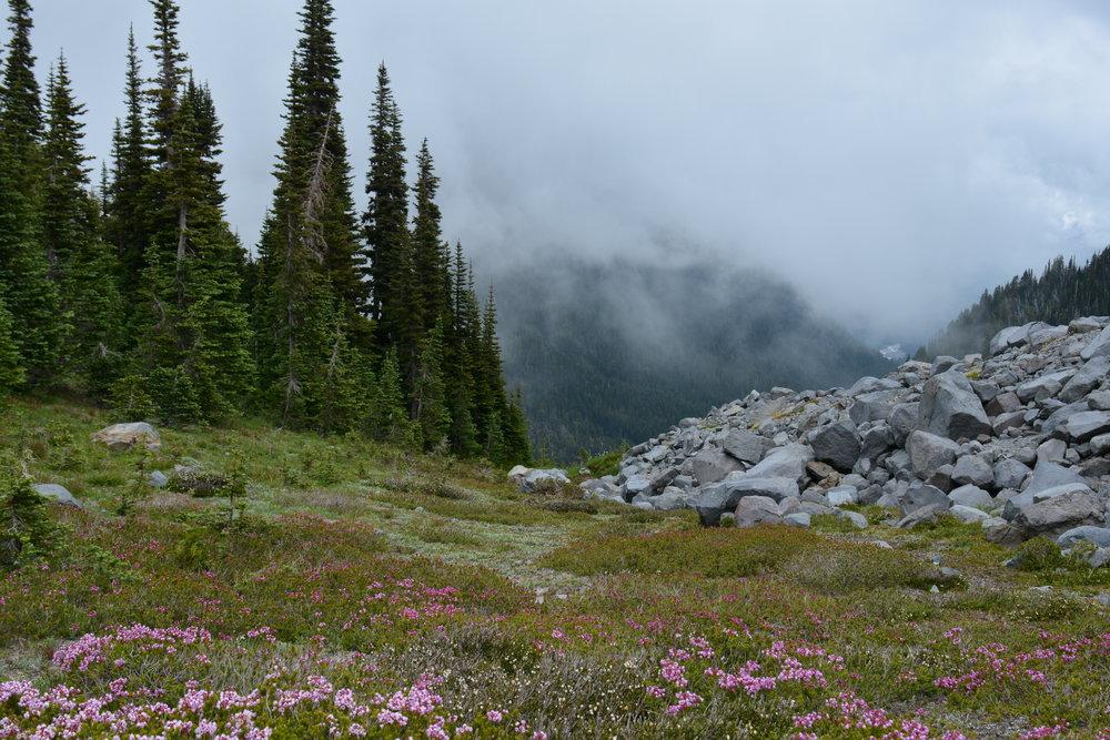 // Location: Summerland Trail on Mount Rainer