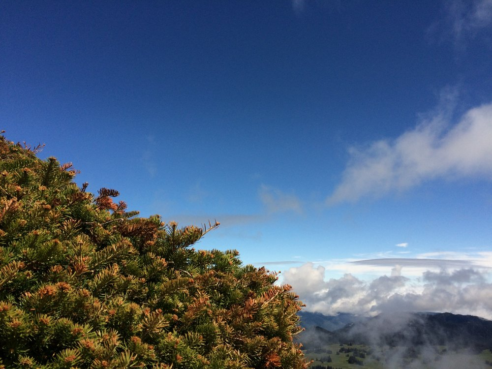 // Location: Mount Rainier