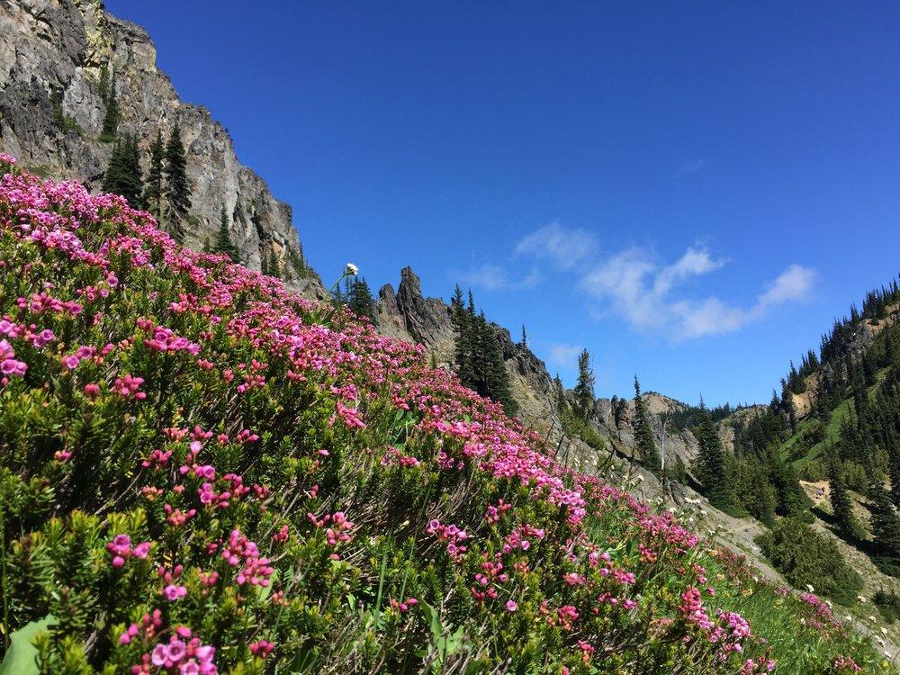 // Sourdough Gap and Sheep Lake | Mount Rainier