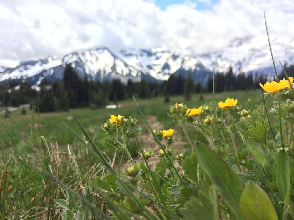 // Mount Fremont | Mount Rainier