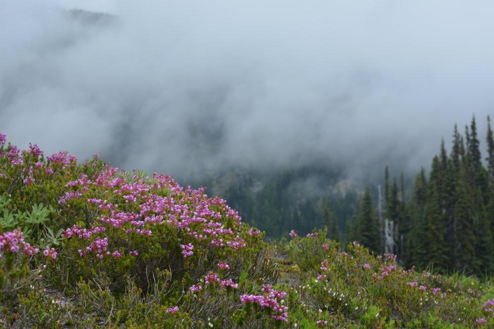 // Summerland Trail | Mount Rainier