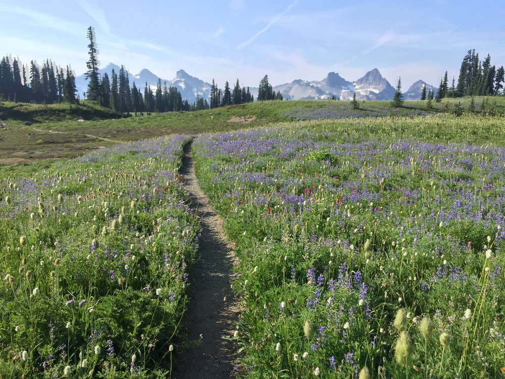 The entire path was lined with wildflowers!