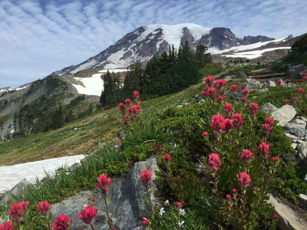 This is probably my favorite view of Mount Rainier that I've seen all summer, mostly because of those wildflower blooms <3