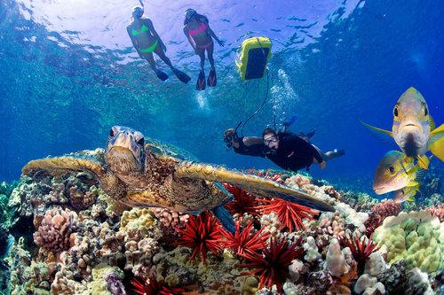 Molokini Snorkel Charters